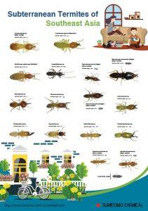 subterranean-termites-of-se-asia-poster